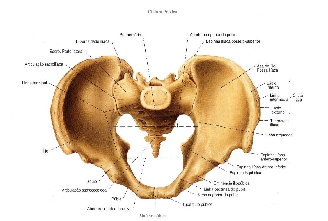 Anatomia humana geral