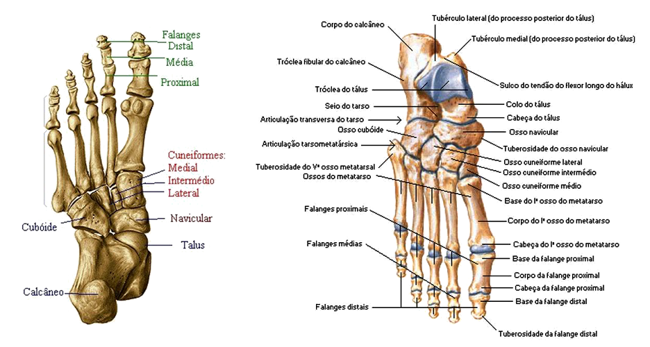 Anatomia Geral