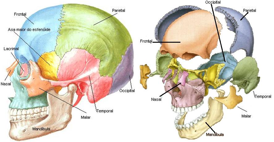 Anatomia Faculdades Inta